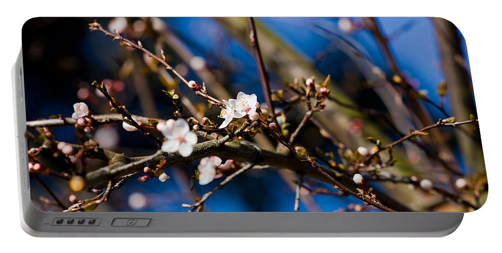 Tree Portable Battery Charger featuring the photograph Blooming Tree With White Flowers by Pati Photography
