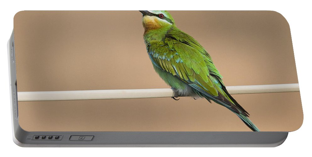 00481394 Portable Battery Charger featuring the photograph Blue Cheeked Bee Eater Hawf Protected by Sebastian Kennerknecht