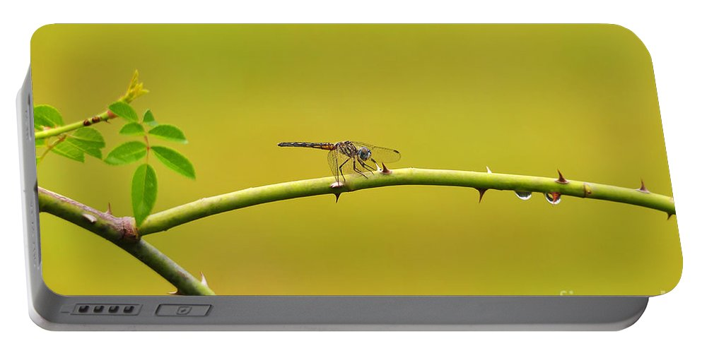 Dragonfly Portable Battery Charger featuring the photograph Blue Dasher Female by Al Powell Photography USA