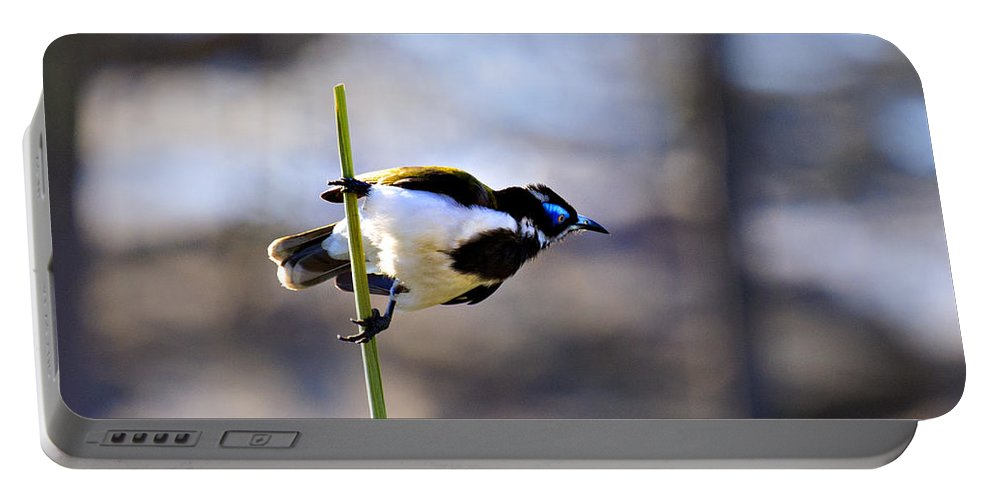 Blue Faced Honey Eater Portable Battery Charger featuring the photograph Blue Faced Honey Eater V3 by Douglas Barnard