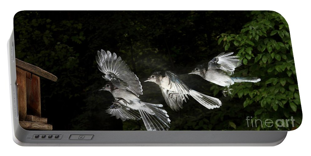 Animal Portable Battery Charger featuring the photograph Blue Jay In Flight by Ted Kinsman