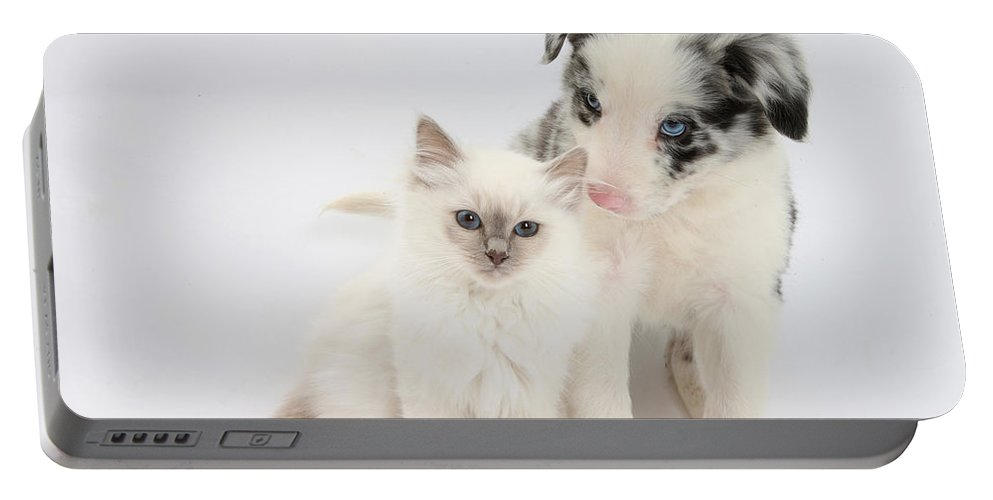 Animal Portable Battery Charger featuring the photograph Blue-point Kitten And Border Collie by Mark Taylor