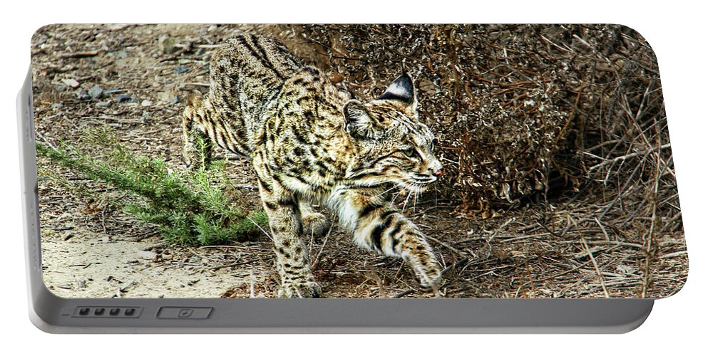 Bobcat Portable Battery Charger featuring the photograph Bobcat Stalking Prey by Mariola Bitner