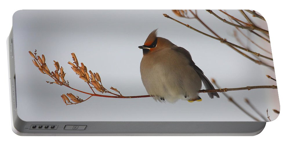 Doug Lloyd Portable Battery Charger featuring the photograph Bohemian Waxwing by Doug Lloyd