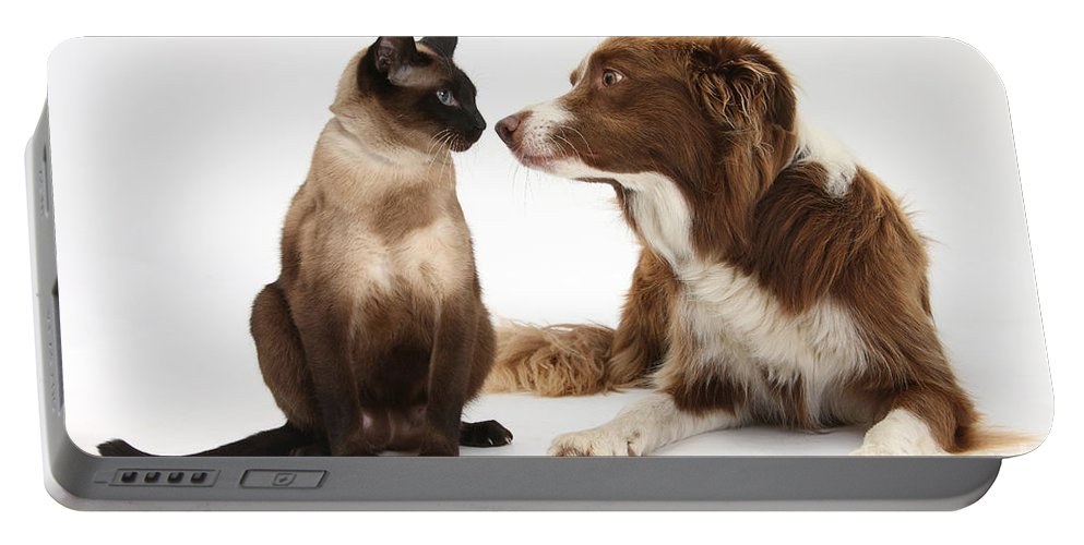 Dog Portable Battery Charger featuring the photograph Border Collie & Siamese Cat by Mark Taylor