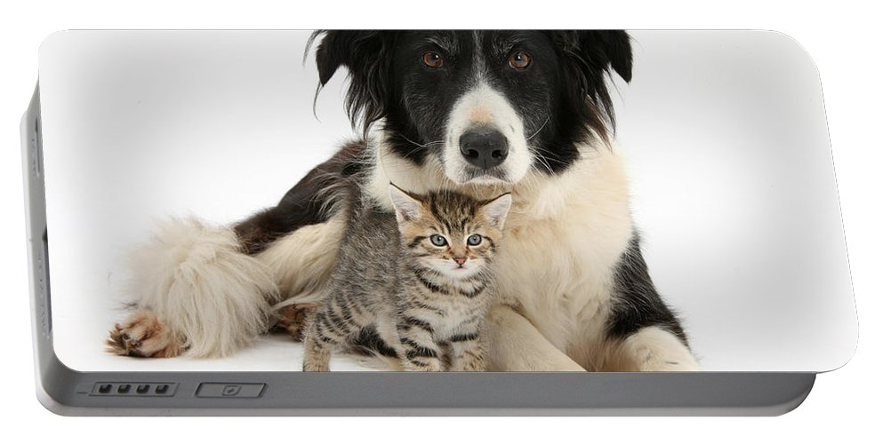 Nature Portable Battery Charger featuring the photograph Border Collie And Kitten by Mark Taylor