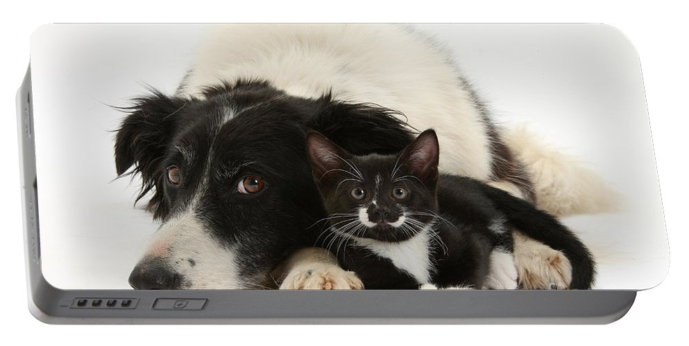 Animal Portable Battery Charger featuring the photograph Border Collie And Tuxedo Kitten by Mark Taylor