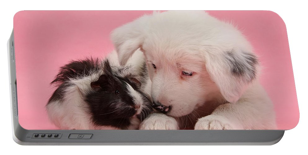 Nature Portable Battery Charger featuring the photograph Border Collie Pup And Guinea Pig by Mark Taylor