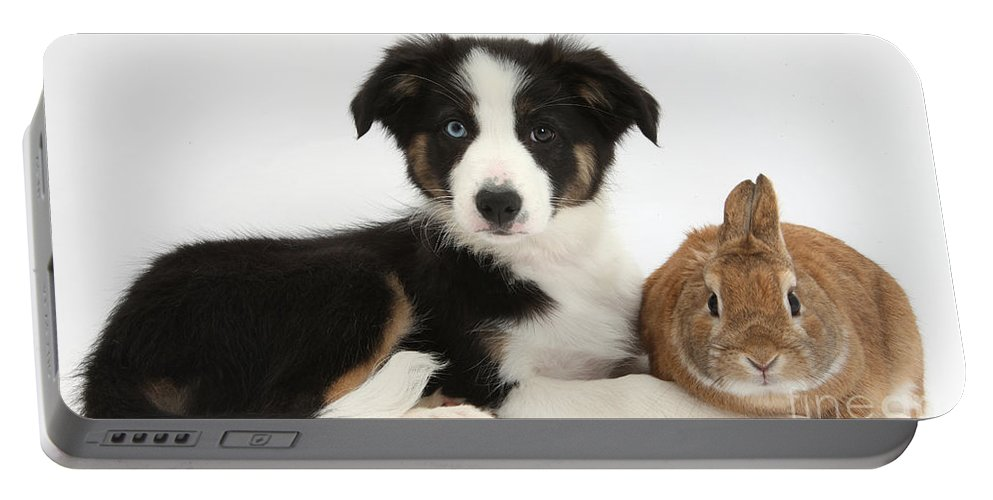 Tricolor Border Collie Pup Portable Battery Charger featuring the photograph Border Collie Pup And Netherland-cross by Mark Taylor