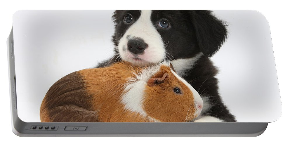 Nature Portable Battery Charger featuring the photograph Border Collie Pup And Tricolor Guinea by Mark Taylor