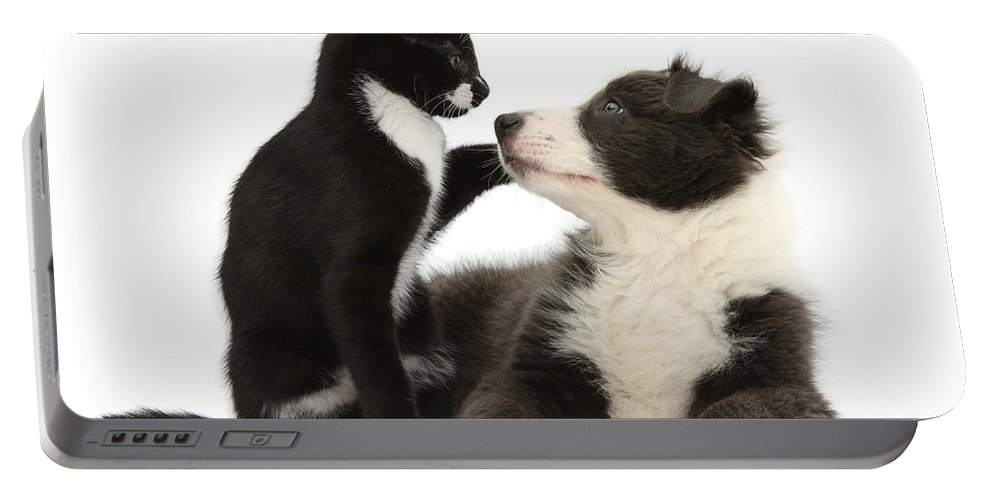 Nature Portable Battery Charger featuring the photograph Border Collie Pup And Tuxedo Kitten by Mark Taylor