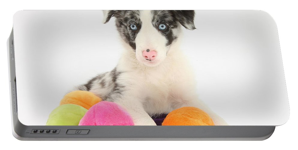 Dog Portable Battery Charger featuring the photograph Border Collie Pup by Mark Taylor