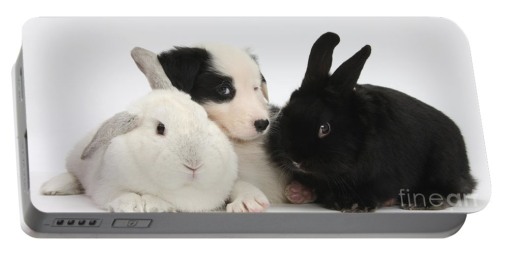 Nature Portable Battery Charger featuring the photograph Border Collie Pups With Black Rabbit by Mark Taylor