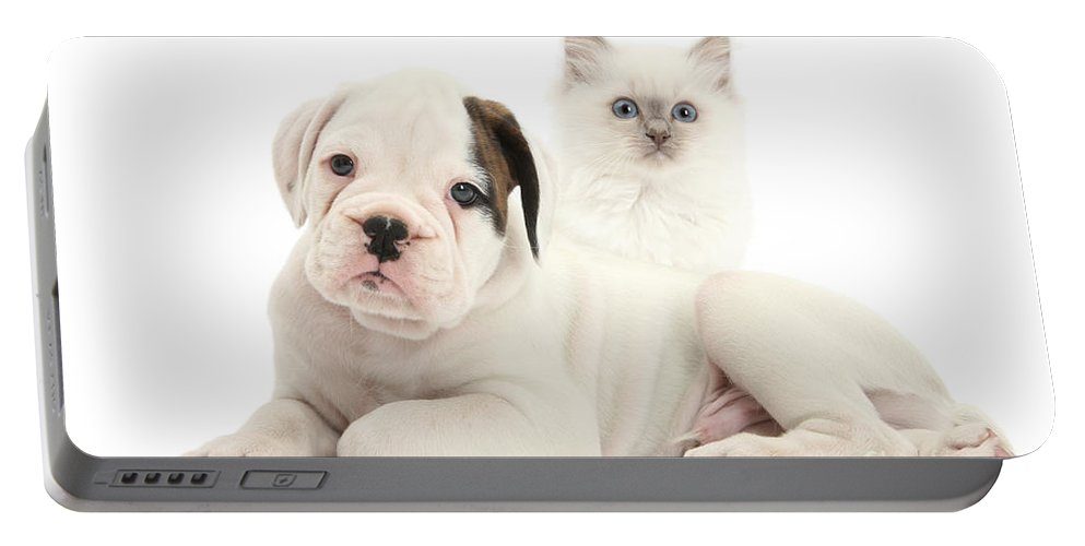 Nature Portable Battery Charger featuring the photograph Boxer Puppy And Blue-point Kitten by Mark Taylor