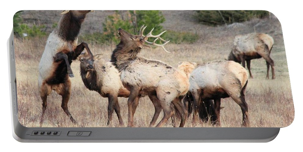 Elk Portable Battery Charger featuring the photograph Boxing Match by Shane Bechler