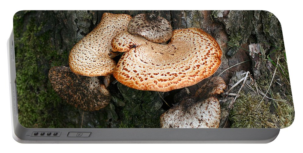 Fungi Portable Battery Charger featuring the photograph Bracket Family by Barbara McMahon