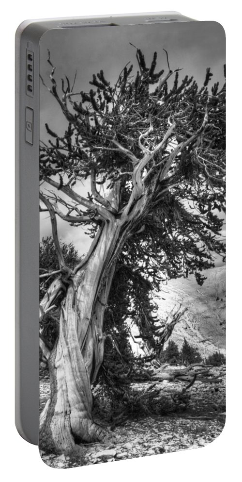 Pine Portable Battery Charger featuring the photograph Bristlecone Patriarch by Joe Schofield