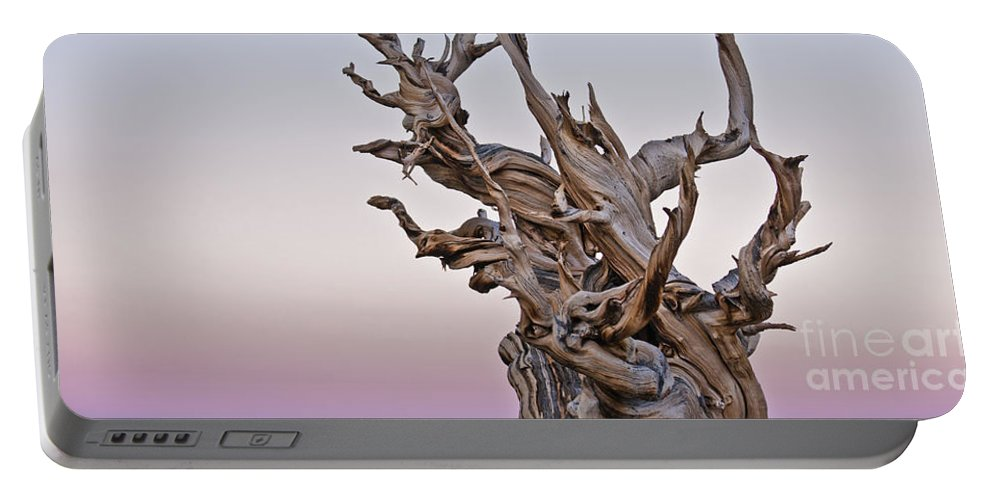Bristlecone Pine Portable Battery Charger featuring the photograph Bristlecone Pine - Early Morning - 1 by Olivier Steiner