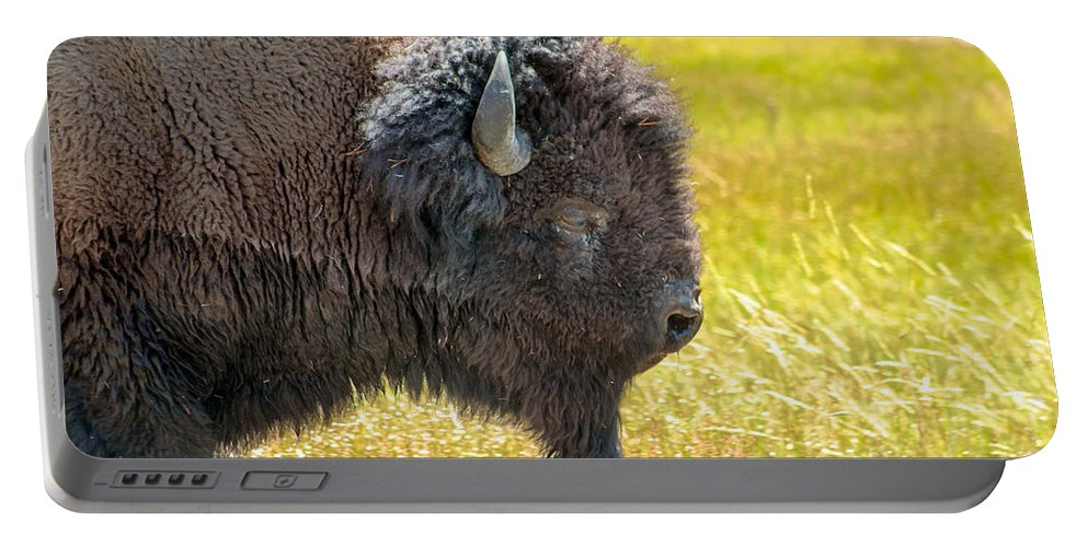 Animals Portable Battery Charger featuring the photograph Buffalo Portrait by Robert Bales