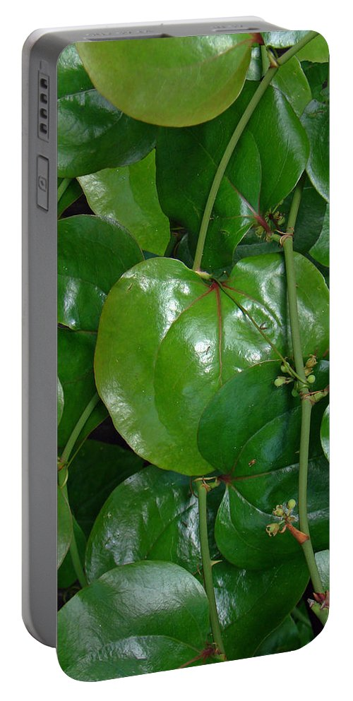 Briar Portable Battery Charger featuring the photograph Bull Briar - Cat Briar - Smilax by Mother Nature