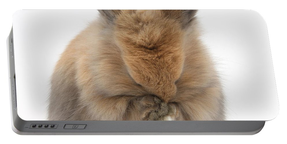 Nature Portable Battery Charger featuring the photograph Bunny Grooming by Mark Taylor