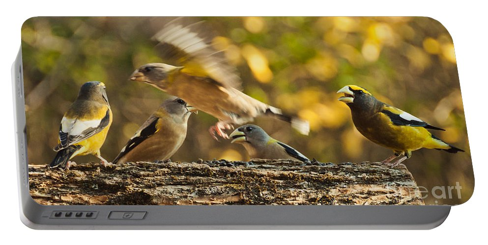 Grosbeak Portable Battery Charger featuring the photograph Busy Birds by Cheryl Baxter