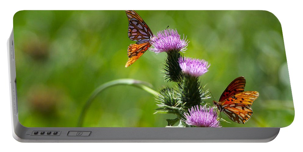 Butterflies Portable Battery Charger featuring the photograph Butterflies On Thistles by Diana Haronis