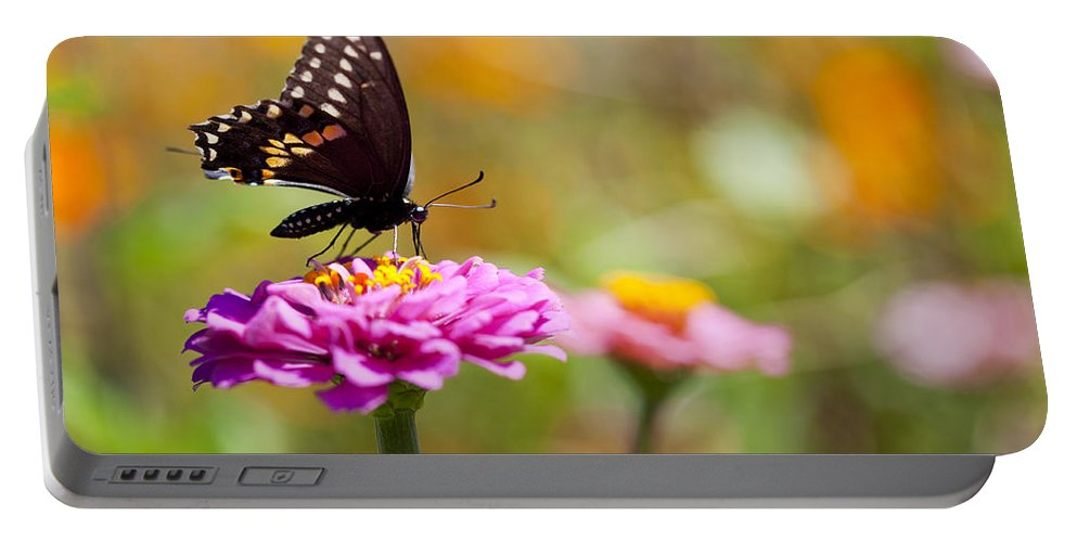 Butterfly Portable Battery Charger featuring the photograph Butterfly On Pink Zinnia by Amy Jackson