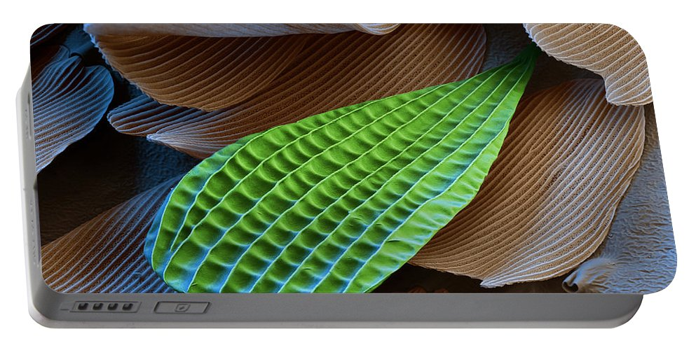 Science Portable Battery Charger featuring the photograph Butterfly Wing Scale Sem by Eye of Science