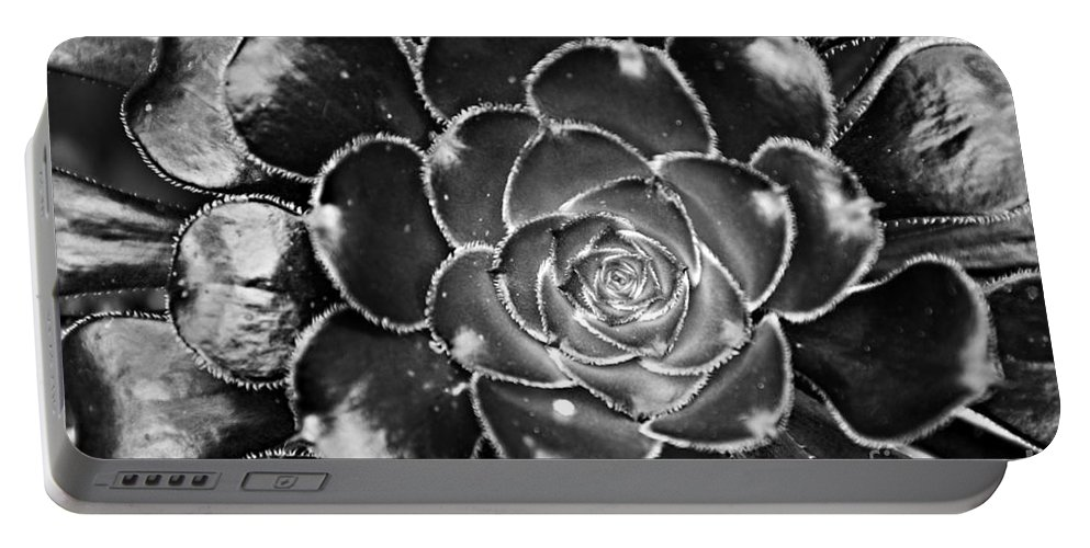Cactus Portable Battery Charger featuring the photograph Cactus 10 Bw by Cassie Marie Photography