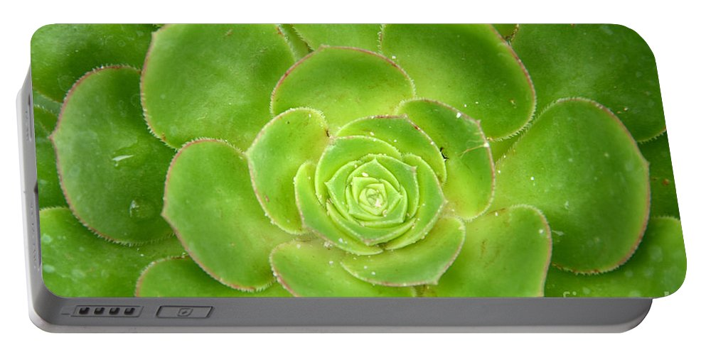 Cactus Portable Battery Charger featuring the photograph Cactus 11 by Cassie Marie Photography
