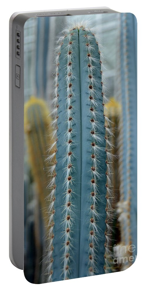 Cactus Portable Battery Charger featuring the photograph Cactus 14 by Cassie Marie Photography