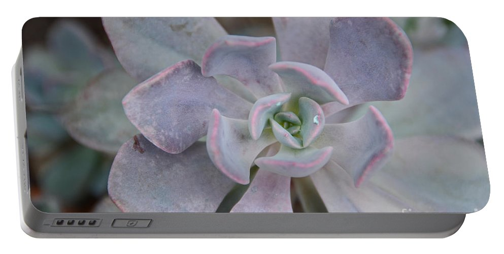 Cactus Portable Battery Charger featuring the photograph Cactus 22 by Cassie Marie Photography