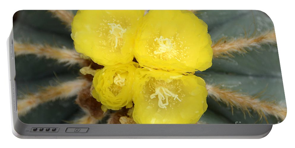 Cactus Portable Battery Charger featuring the photograph Cactus 37 by Cassie Marie Photography
