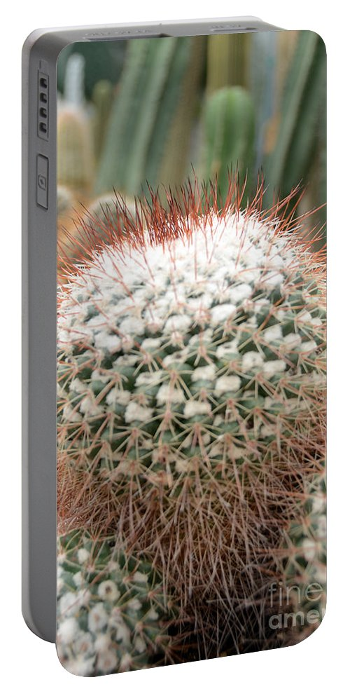 Cactus Portable Battery Charger featuring the photograph Cactus 43 by Cassie Marie Photography