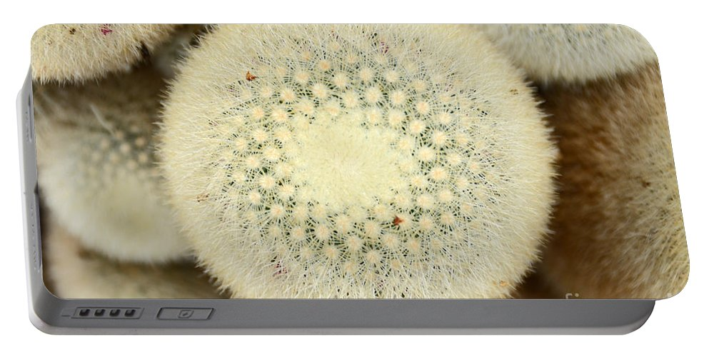 Cactus Portable Battery Charger featuring the photograph Cactus 44 by Cassie Marie Photography