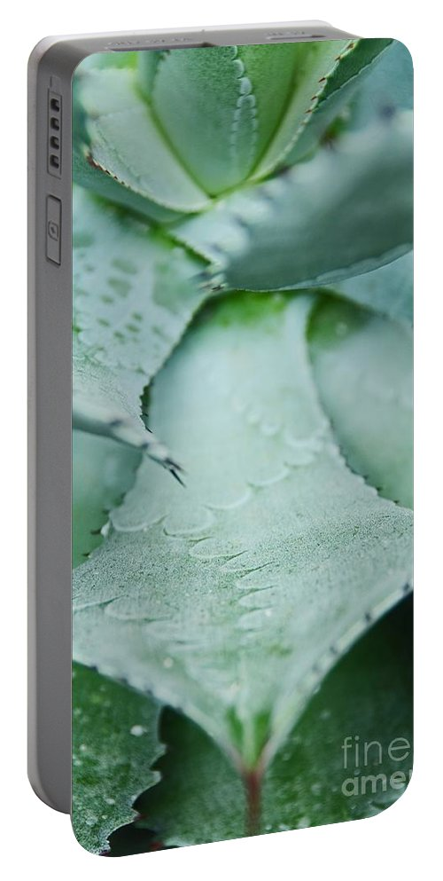 Cactus Portable Battery Charger featuring the photograph Cactus 5 by Cassie Marie Photography