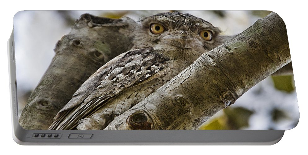 Tawny Frogmouth Portable Battery Charger featuring the photograph Camouflaged V3 by Douglas Barnard