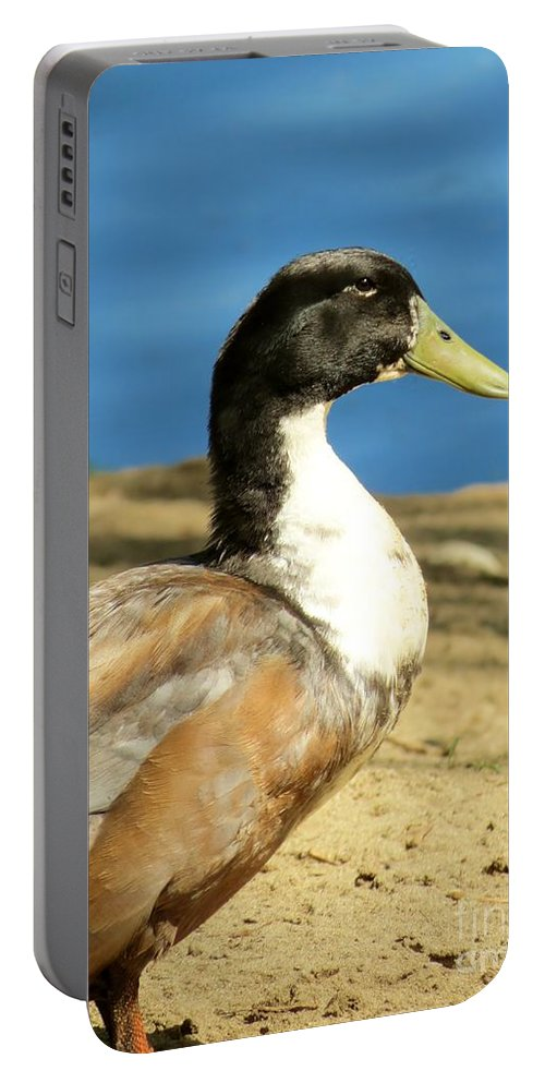 Muscovy Framed Prints Portable Battery Charger featuring the photograph Camp Bell by Art Dingo