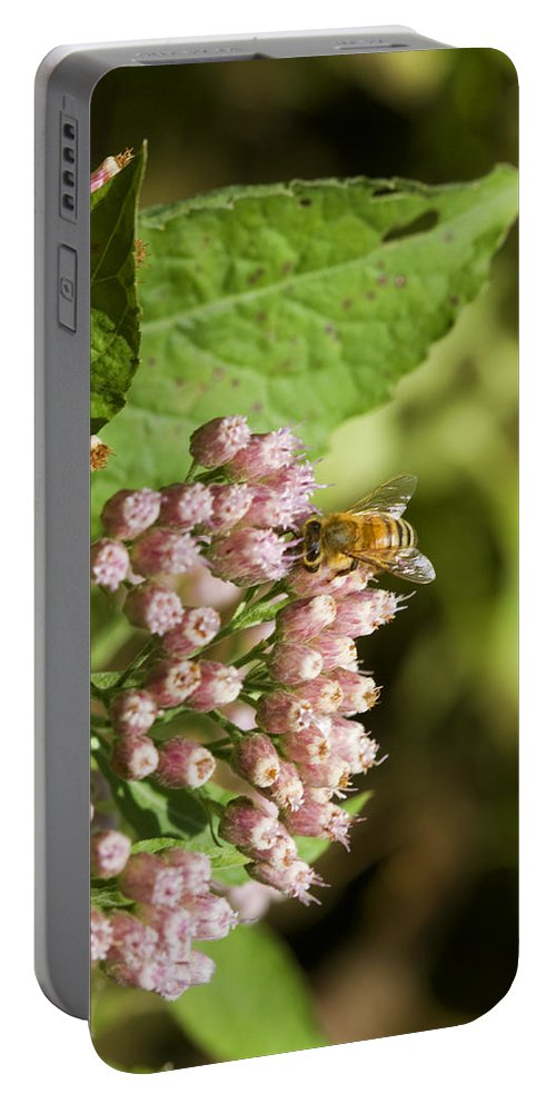 Pluchea Camphorata Portable Battery Charger featuring the photograph Camphorweed Wildflowers And Honey Bee by Kathy Clark