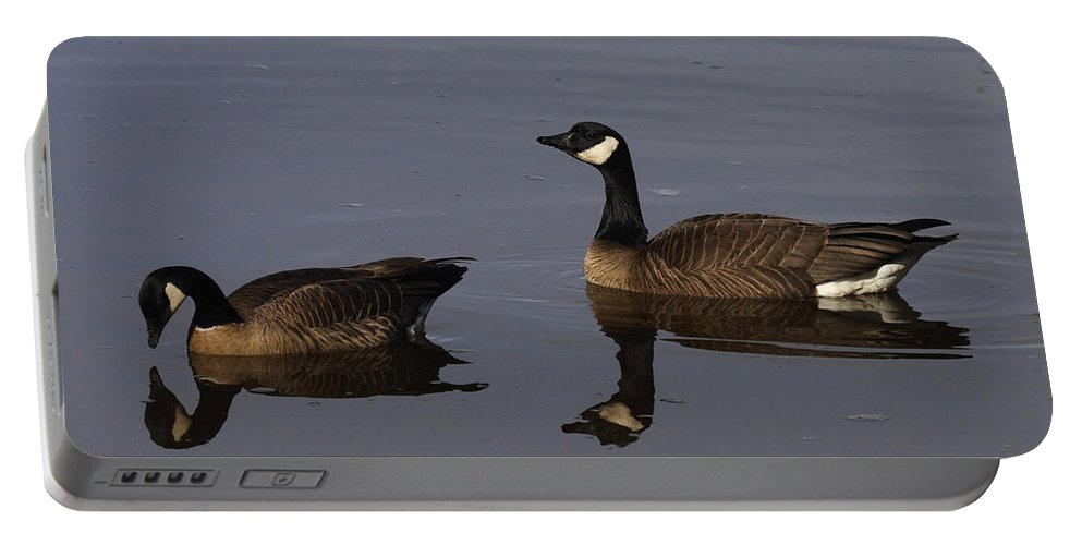 Doug Lloyd Portable Battery Charger featuring the photograph Canada Geese by Doug Lloyd