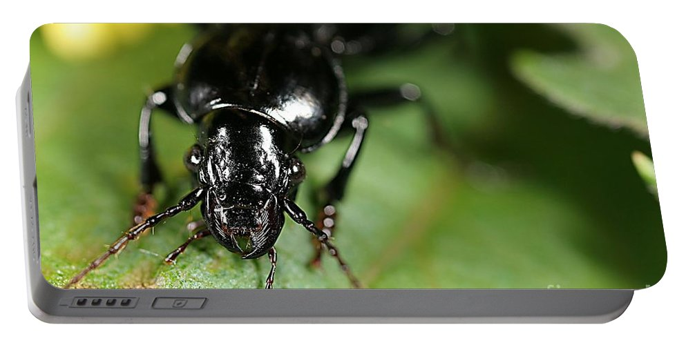 Diabrotica Sp Portable Battery Charger featuring the photograph Carabid Beetle Rootworm Rredator by Science Source