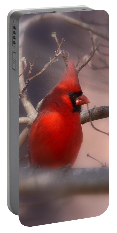 Cardinal Portable Battery Charger featuring the photograph Cardinal - Unafraid by Travis Truelove