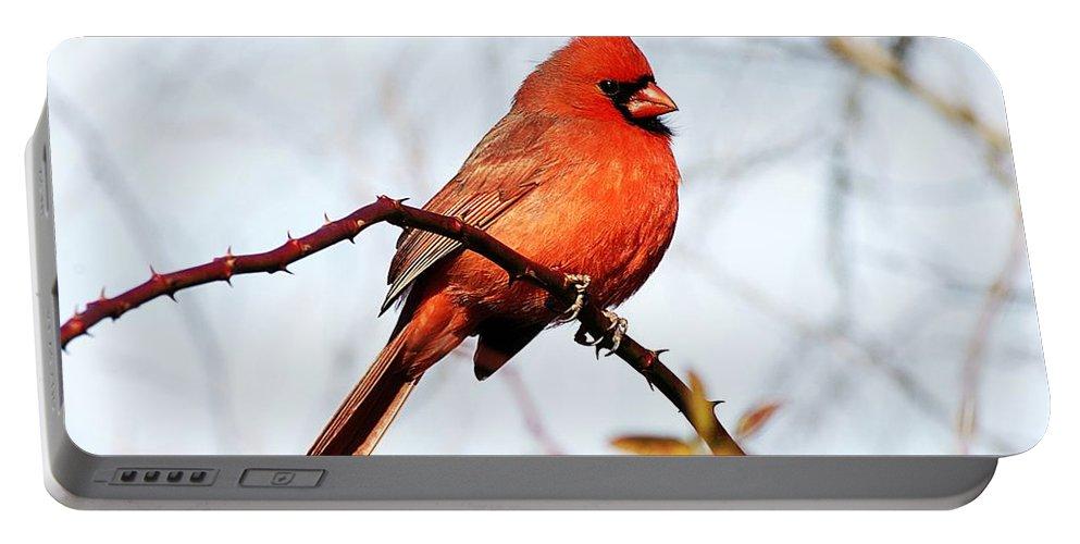 Cardinal Portable Battery Charger featuring the photograph Cardinal 1 by Joe Faherty