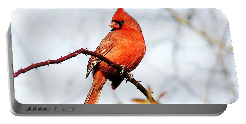 Portable Battery Charger featuring the photograph Cardinal 2 by Joe Faherty