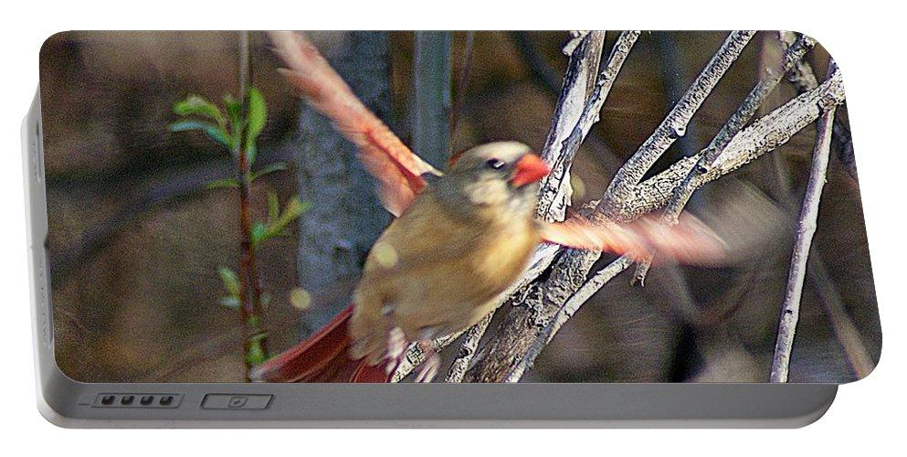 Cardinal Portable Battery Charger featuring the photograph Cardinal 4 by Joe Faherty