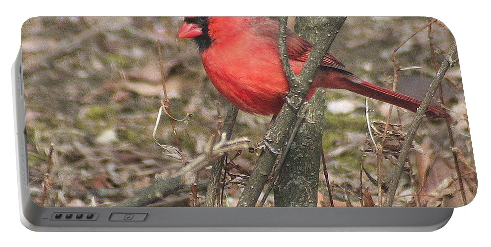 Northern Cardinal Portable Battery Charger featuring the photograph Cardinal In A Bush by Laurel Talabere