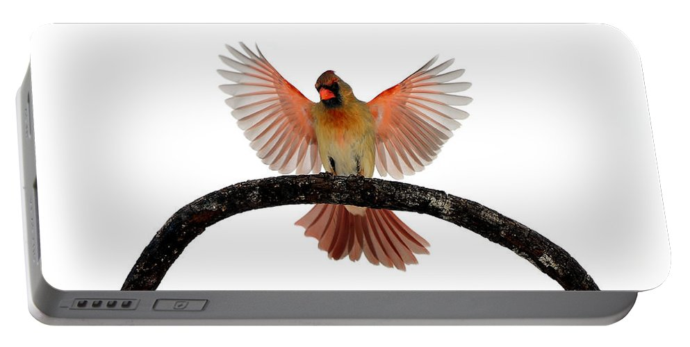 Cardinal In Flight Portable Battery Charger featuring the photograph Cardinal Landing On Handle by Randall Branham