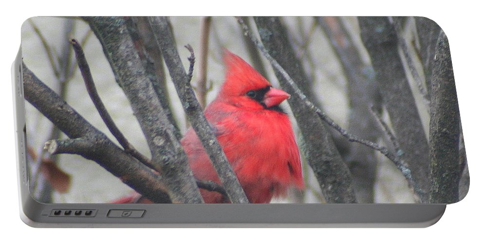 Northern Cardinal Portable Battery Charger featuring the photograph Cardinal With Fluffed Feathers by Laurel Talabere