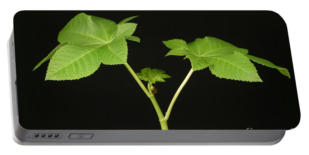 Plant Portable Battery Charger featuring the photograph Castor Bean Plant by Ted Kinsman